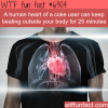 cocaine effect on the heart wtf fun facts