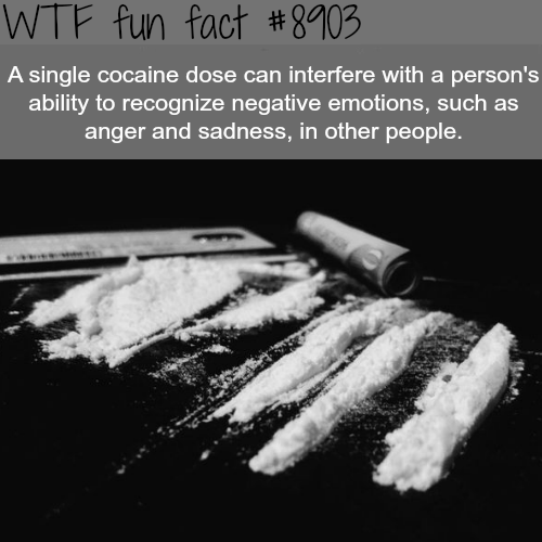 Cocaine - WTF fun facts