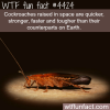 cockroaches raised in space wtf fun facts