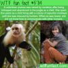 colombian women raised by capuchin monkeys wtf