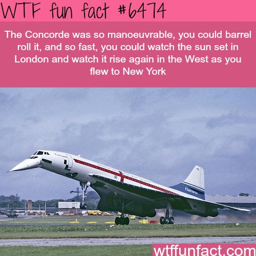 Concorde airplane - WTF fun facts