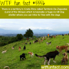 costa ricas land of the strays wtf fun facts