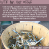 crab mentality wtf fun facts