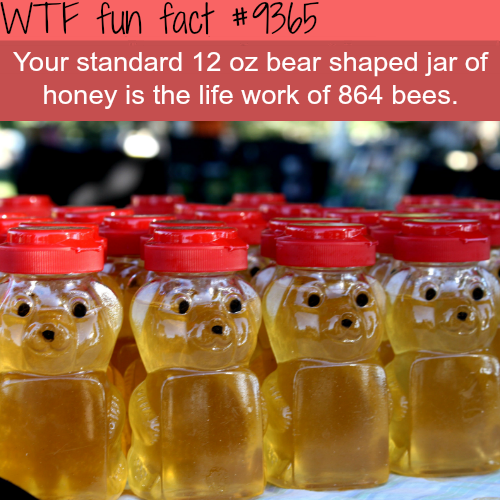 Crazy fact about honey - WTF fun facts