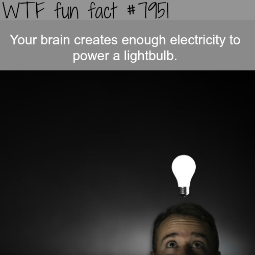 Crazy facts about the human brain - WTF fun fact