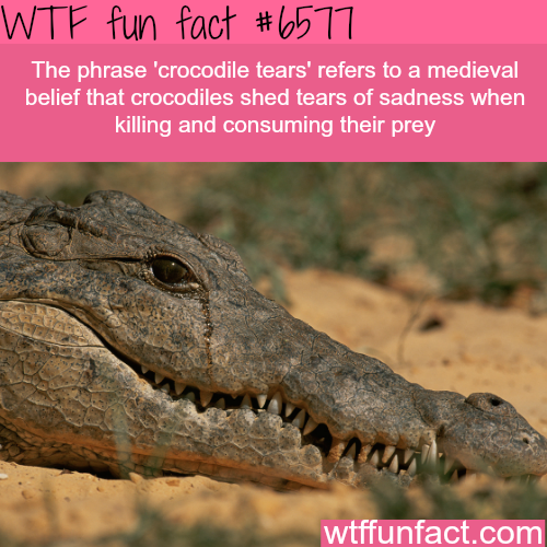 Crocodile Tears - WTF fun facts