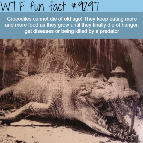 Crocodiles - WTF fun fact