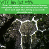 crown shyness wtf fun facts