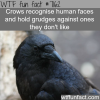 crows will grudges on the humans they dont like