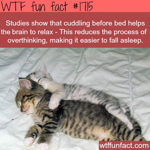 Cuddling before bed facts -WTF fun facts