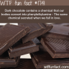 dark chocolate have a similiar effect as love