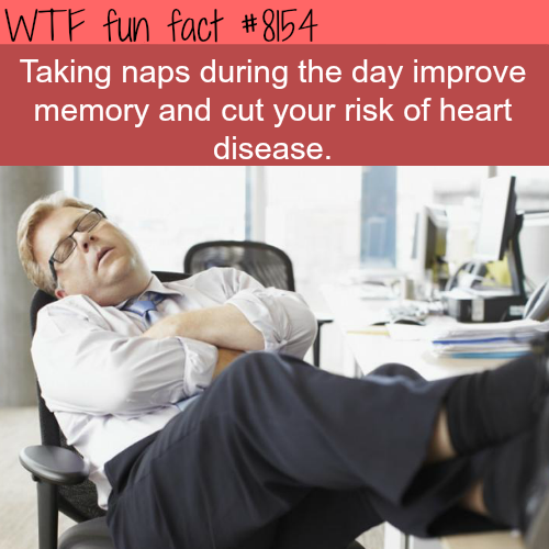 day naps are good for your health - WTF fun fact