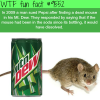 dead mouse in a mountain dew wtf fun fact