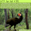 demon duck of doom wtf fun facts