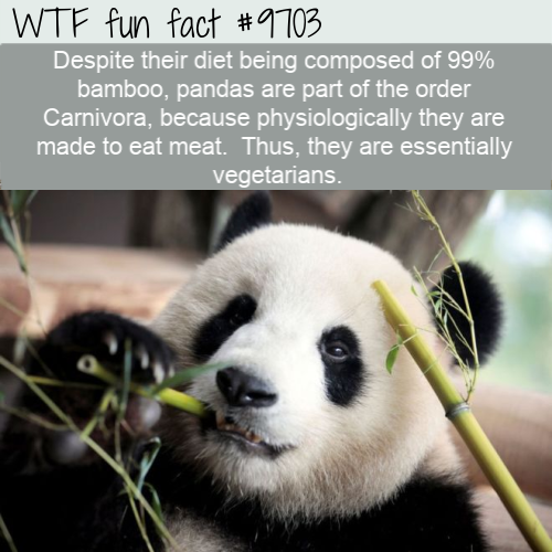 Despite their diet being composed of 99% bamboo
