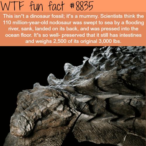 dinosaurmummy - WTF fun facts