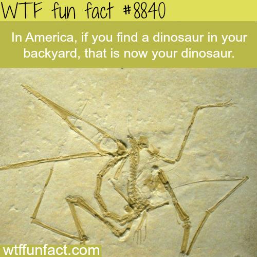Dinosaur - WTF fun facts