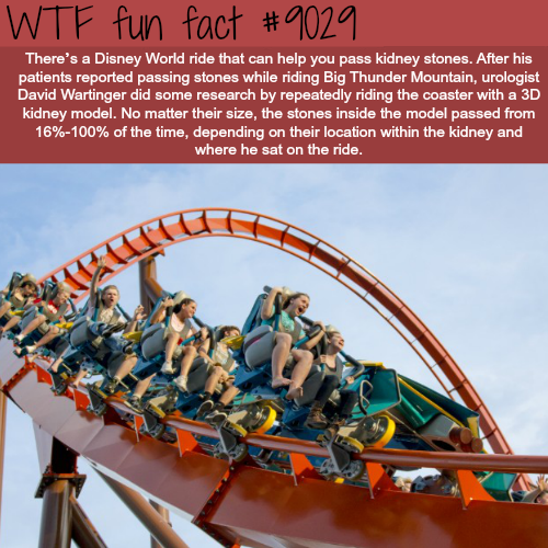 Disney world ride that will help you pass a kidney stone - WTF fun facts