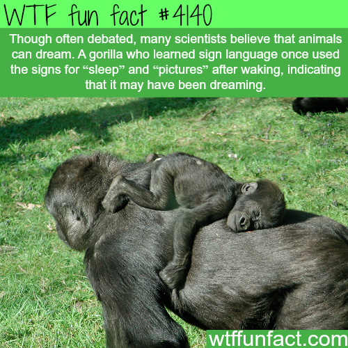 Do animals dream? -  WTF fun facts