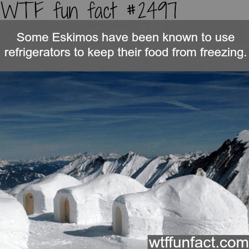 Do Eskimos use refrigerators?-WTF funfacts