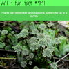 do plants remember things wtf fun facts