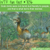 dodo bird wtf fun facts