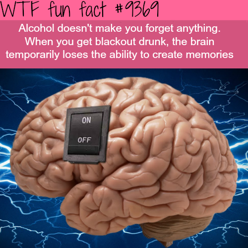 Does Alcohol make you forget? - WTF fun facts