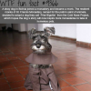 dog facts wtf fun facts