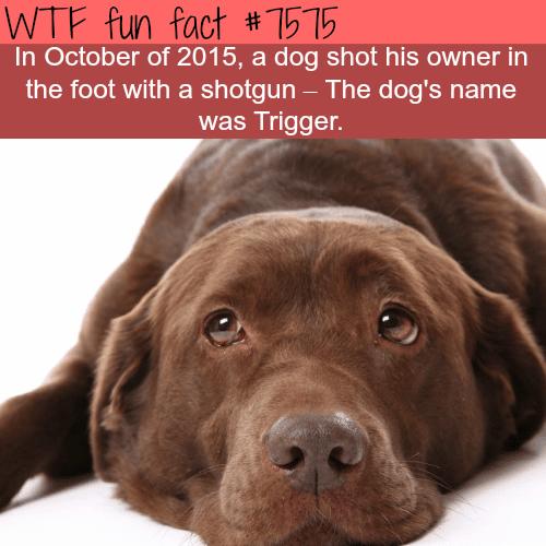 Dog named trigger