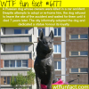 dog waits for its owners for 7 years wtf fun