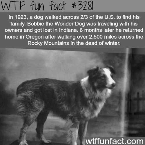 Dog walked across the United States to see his family -WTF fun facts