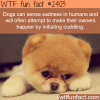 dogs can sense sadness in humans