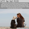 dogs facts wtf fun facts