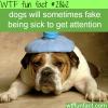 dogs fake health