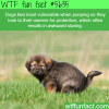 dogs feel most vulnerable when pooping wtf fun