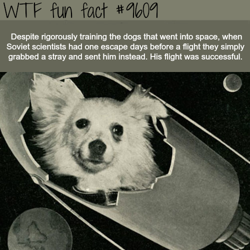 Dogs in Space - WTF fun fact
