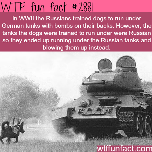 Dogs in World War Two -WTF fun facts