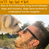 dogs understand human laughter wtf fun facts