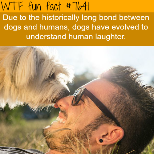 Dogs understand human laughter - WTF FUN FACTS