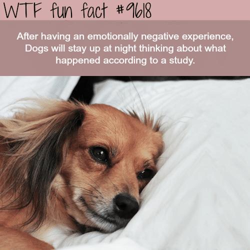 Dogs - WTF fun fact