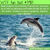 dolphin bromance