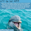 dolphins have their own unique whistle wtf fun