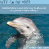 dolphins talking on phone wtf fun facts