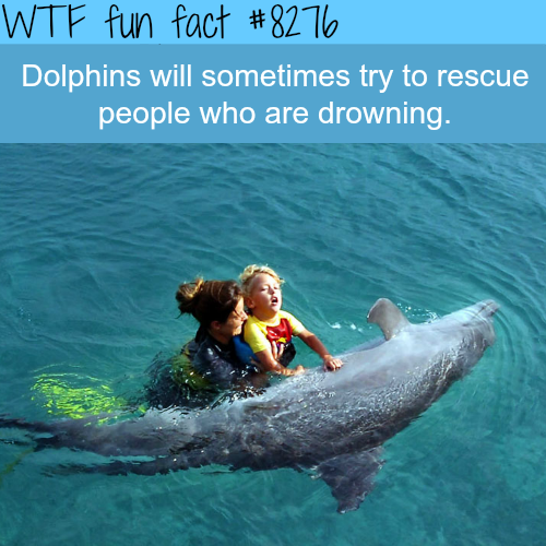Dolphins will try to rescue drowning people - WTF fun facts