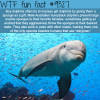 dolphins wtf fun facts