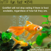 dont overfeed your goldfish wtf fun facts
