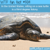 dont sit on a sea turtle wtf fun facts