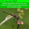 dragonflies will fake death to avoid sexual