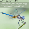 dragonflies wtf fun facts