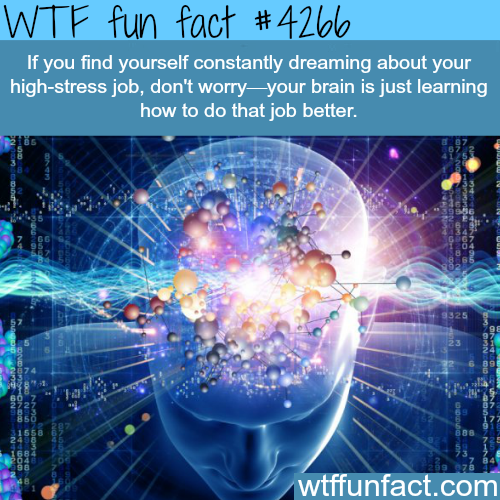 Dreaming about your high stress job -  WTF fun facts